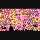 BlossomTransition 2