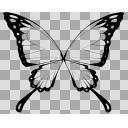 蝶(透過)
