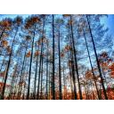 森の木々(秋)