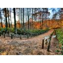 森の中の小道(秋)
