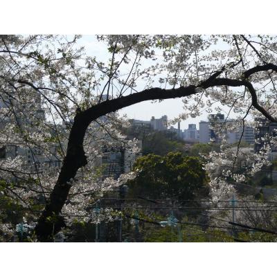 飛鳥山(東京都北区)