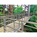 植物園(温室):n_garden007b