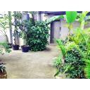 植物園(エレベーター):n_garden010b