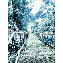冬の木々と階段