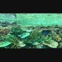 【動画素材】名古屋港水族館サンゴ礁大水槽 その1