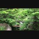 【動画素材】徳川園にて その1