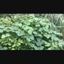 雑草の動画