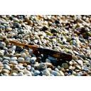 マーブルビーチに打ちあがった木製バット