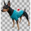 服を着た犬の透過素材