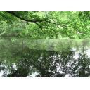 森林の中の池⑤