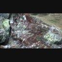 【動画素材】谷川の流れ【夏】 ループ 2