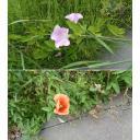 花雑草セット