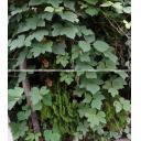 葉っぱセット
