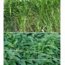 雑草セット