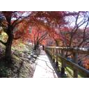 紅葉と木漏れ日の道