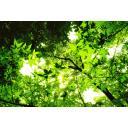 緑の木漏れ日