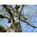 この木なんの木?(1)