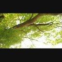 水辺の風景02 楓