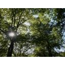 【自然】木漏れ日キラキラ