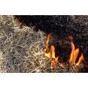 芝焼きの炎