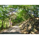 新緑の山道