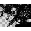 木陰 透過素材4