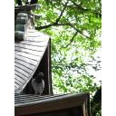 二荒山神社の鳩