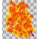 紅葉の枝2 透過PNG