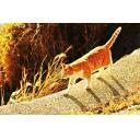 のびやかに歩く猫