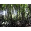 メコンデルタのジャングル2
