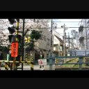 桜の在る風景(南新宿 小田急沿線)