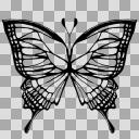 蝶 透過済
