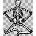 全身の骨イラスト
