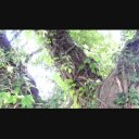 ジャングル / ツタが巻き付いた木1【1080p】MMD背景などに
