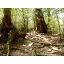 屋久島(もののけの森)の林道