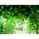 植物園(緑葉のアーチ):n_garden006b