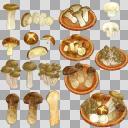 食用きのこセット(3D・CG)