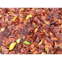 背景・テクスチャ(濡れた枯葉)(640×480)