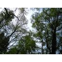 森で空を見上げる
