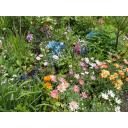 初夏の庭園にて