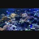 【動画素材】名古屋港水族館サンゴ礁大水槽 その2