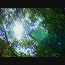 【動画】セミの鳴き声
