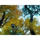 秋の居残り