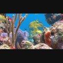 海の動画、海の中、海の壁紙