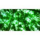 森林(見上げる)