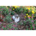 花壇の中の猫