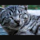 ねこ猫06 動画素材