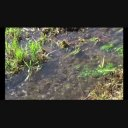 背景映像「川の流れ」