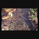 背景映像「水の流れ」②