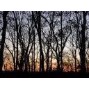 森の奥の奥